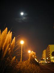 Midnight Boardwalk