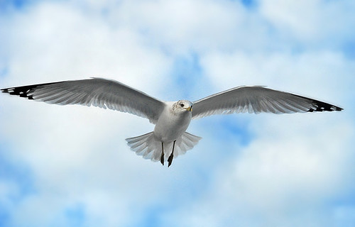 Seagull  by Jeny's flickr page