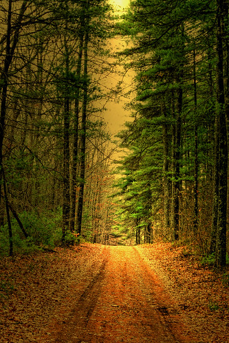 Road thru the Piney Wood