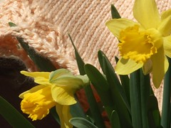lace-cap-with-daffodils