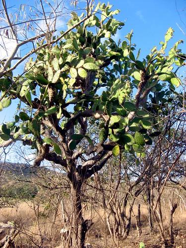 Flora seca
