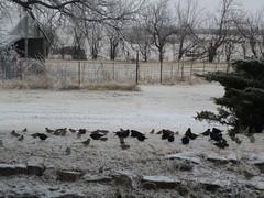 lots birds