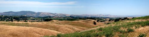 Napa Panorama