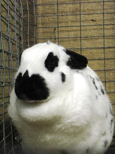 Massive rabbit disapproval.