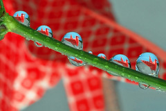 paper cranes in a drop