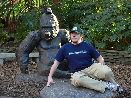 Gorilla Joey