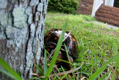 turtle spy