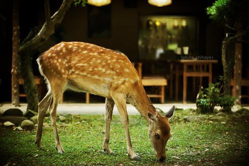 2767 : One day, I met deer! #1