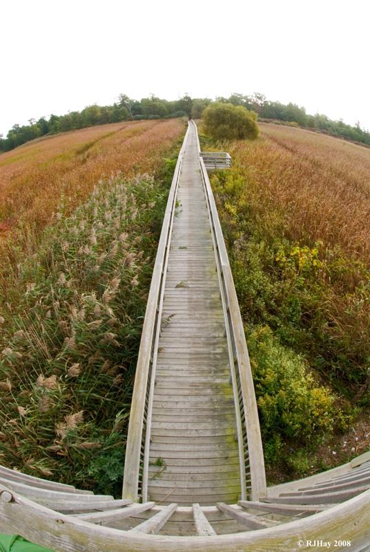 Marsh trail observation tower - Rondeau Provincial Park