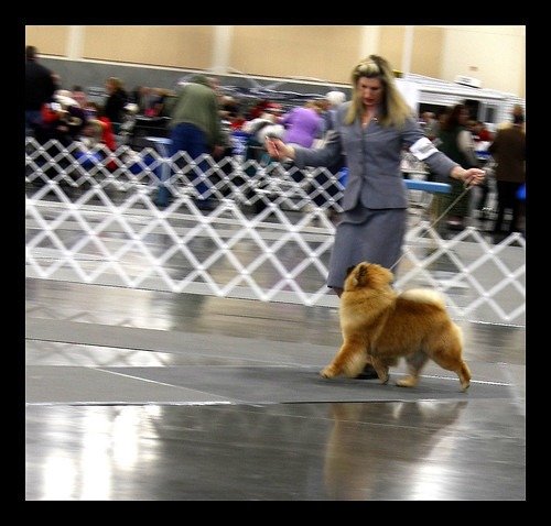 Today visiting my grandchowdren at the Vancouver Dog show