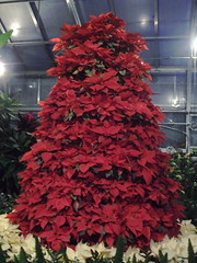 Poinsettas in the shape of a tree