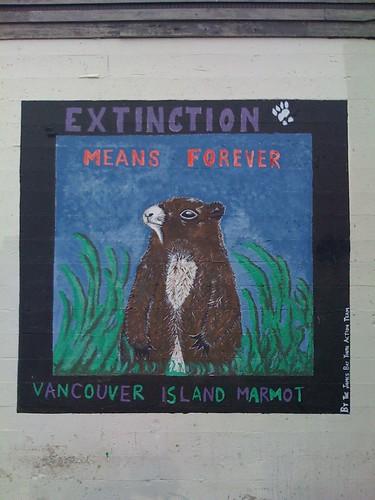 Dramatic Vancouver Island Marmot