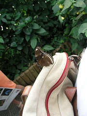 Butterfly on my bag, at the Natural History Museum, London, Summer 2008.