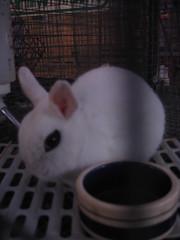 Emo Bunny hates you.