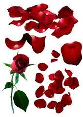Flower 5 _ Rose & Petals