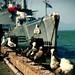 birds & battleship