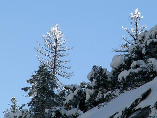 Day 03 - Ice Trees