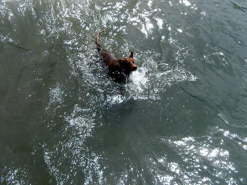 Oso at Laguna de Apoyo