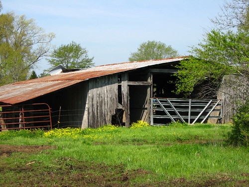 Another Spring for an Old Barn