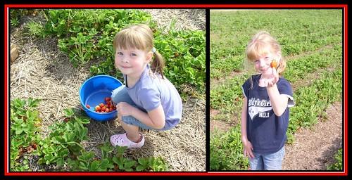 #1 strawberry pickers