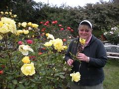 Blue Ox rose garden
