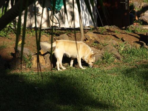 Nani - half fox, half dog