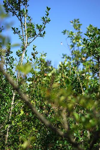 forest, düzce, pentax k10d