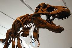 Dinosaur by shvmoz, on Flickr