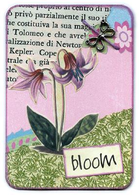Bloom 3/3