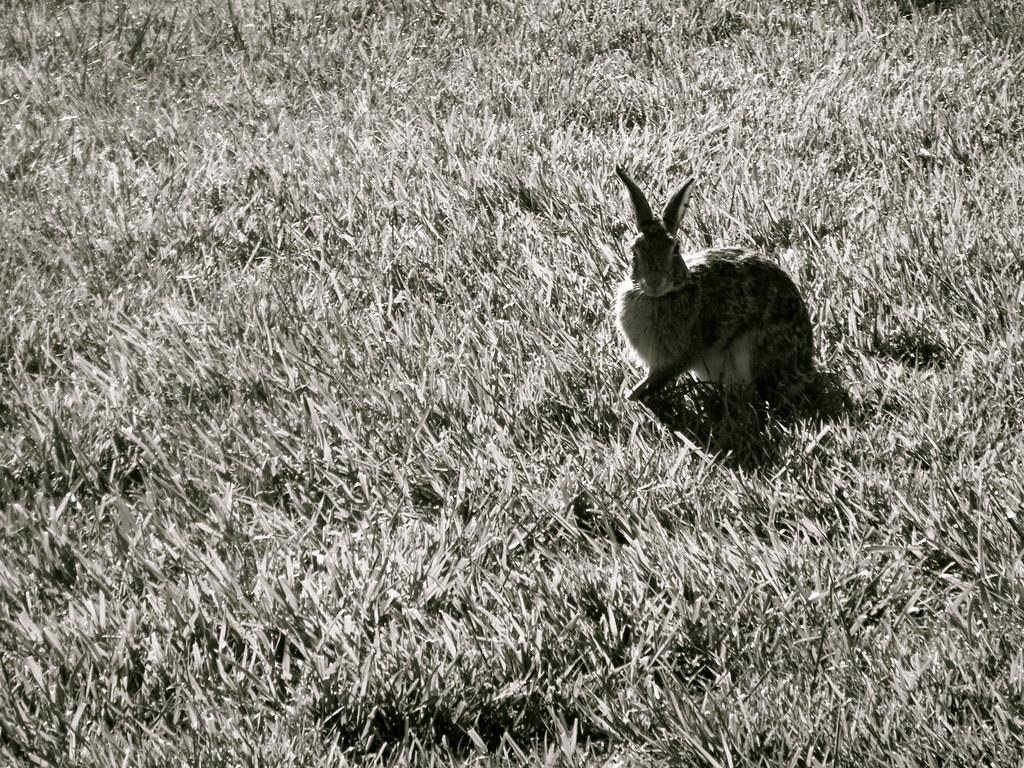 Perky Bunny