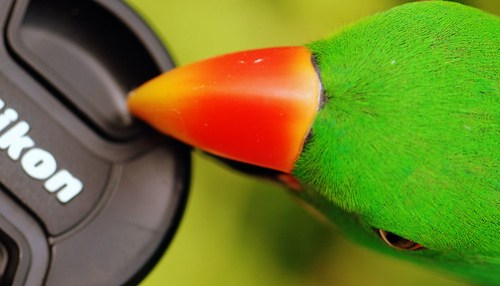 Green Bird and Camera