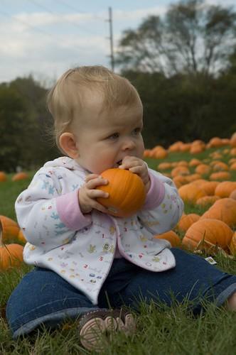 pumpkins 08-43