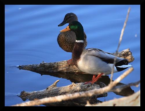 duck2edit