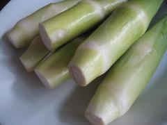 waterbamboe