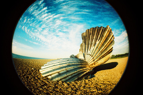 """Scallop Fisheye #2"" by slimmer_jimmer on flickr"