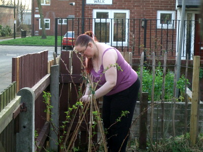rare pic of me! Im tying in the raspberry canes to regular canes. (and Mum, they fruit on last years growth, and these were new last year. so no, i dont cut them, not yet. Or ill have no raspberries!)