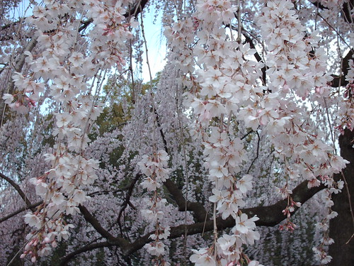 japan 2008 095