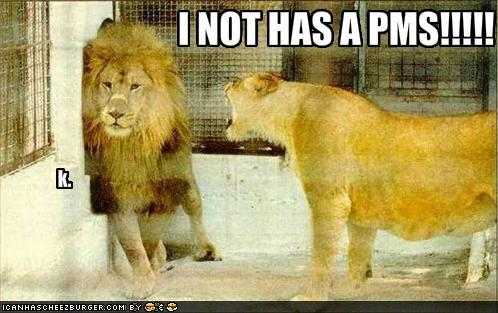 funny-pictures-girl-lion-yells-at-boy-lion