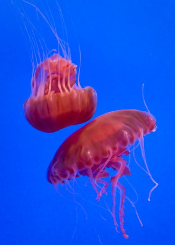 Jellyfish by you.