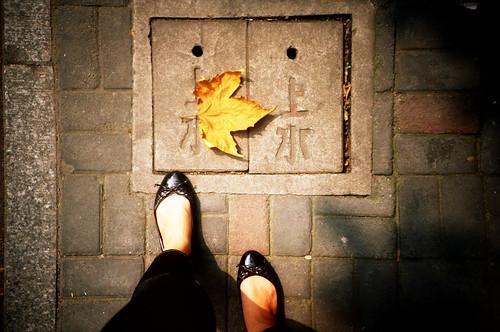 [shanghai] autumn leaves , 秋天別來。