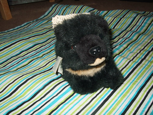 Luna the Moon Bear (teddy)