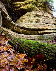 Forest Floor and Bluff