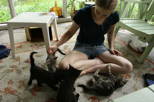 Four kittens and a girl