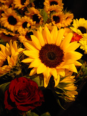 sunflower & rose