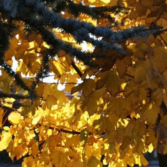 #146 - Enjoy fall