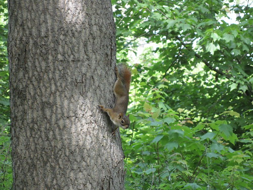 Squirrel, Point Pleasant Park