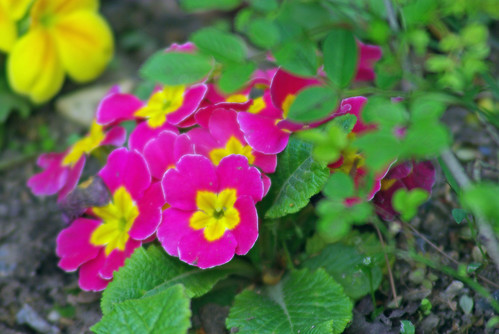 purple-yellow flowers, istanbul, pentax k10d
