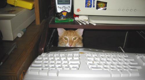 20080809 - Oranjello - I'm in UR computr - 164-6449