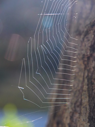 Sunlight on a Spiders Web