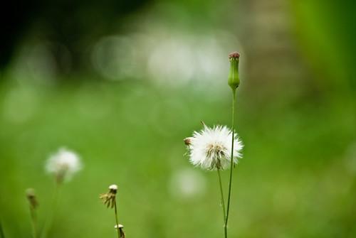 Hoa dại by Gin n tonic.